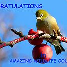 Challenge Banner Entry - Amazing Wildlife Group - Silvereye NZ by AndreaEL