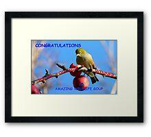 Challenge Banner Entry - Amazing Wildlife Group - Silvereye NZ Framed Print
