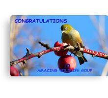 Challenge Banner Entry - Amazing Wildlife Group - Silvereye NZ Canvas Print