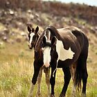 Chenelle and Colt by Tracey Westbury