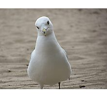 Seagul Photographic Print