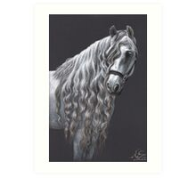Andalusier - Andalusian Horse Art Print