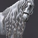 Andalusier - Andalusian Horse by Nicole Zeug