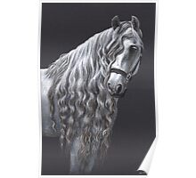 Andalusier - Andalusian Horse Poster