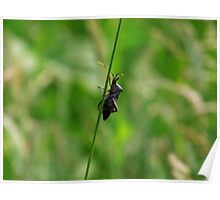 Squash Bug  Poster