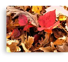 """A Closer Look at Fall""... prints and products Canvas Print"