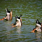 Land Park Synchronized Swim Team by Xcarguy