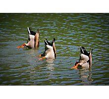 Land Park Synchronized Swim Team Photographic Print