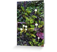 Minute fungii Greeting Card