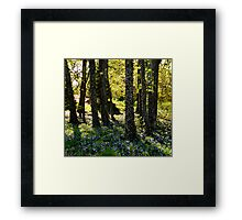 Forest of Wonder Framed Print
