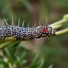 Caterpillar by trevorb