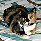 Meet Molly! Cat Portrait by BlueMoonRose