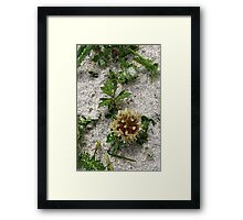 Hebridean Wildflower in the Sand Dunes Framed Print