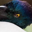 """Jabiru Profile"" by Heather Thorning"