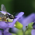 Bee and Pea by KatsEyePhoto