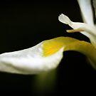 Petal by KatsEyePhoto