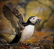 Puffin with sand eels by Tarrby