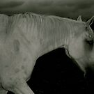 Midnight Rambling- White Horse Striding Out At Dusk. by Lou Wilson