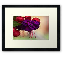 First of the Year Framed Print
