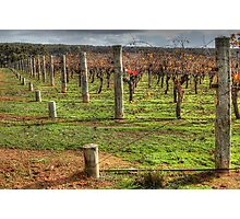 A Frankland Vineyard Photographic Print