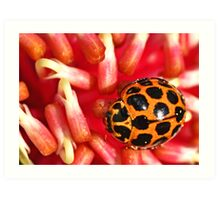 Ladybird lost Art Print