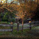Golden Glow by John Morton