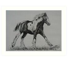 Gypsy Cob Foal Art Print