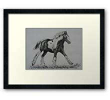 Gypsy Cob Foal Framed Print