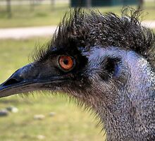 Emu by Carla Jensen