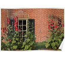 Hollyhocks in the Garden Poster