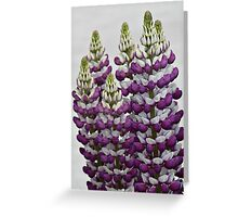 Purple Lupins Greeting Card