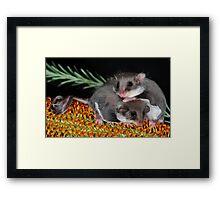 """ Smallest Gliding Mammal in the World "" Framed Print"