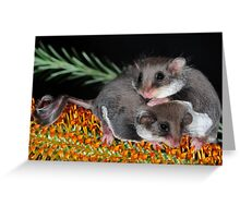 """"""" Smallest Gliding Mammal in the World """" Greeting Card"""