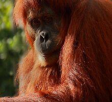 Ranga - Facing Extinction. by Barbara  Glover