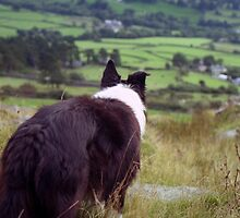 Indy taking in the view. by Michael Haslam
