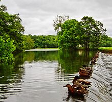 The Weir at Whalley by inkedsandra