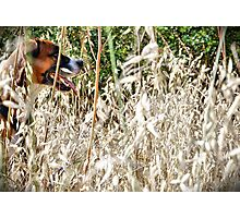 A walk in the country 2. Photographic Print