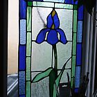 BLUE FLAG IRIS STAINGLASS by eoconnor