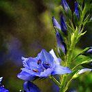 Grunge Blue FLowers #1 by William Martin