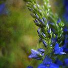 Grunge Blue Flowers #2 by William Martin
