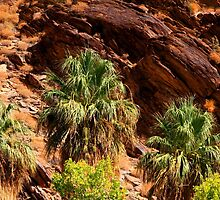 Palm Canyon by Amy Hallowes