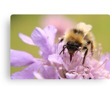 Busy busy Bumble Bee Canvas Print