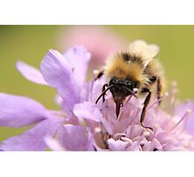 Busy busy Bumble Bee Photographic Print