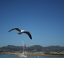 Seagull in the Bay by Amy Hallowes