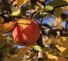 Apple Tree by Amy Hallowes