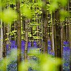 See through blue - Belgium by Ulla Jensen