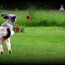 Jump & Fetch by AngieBanta