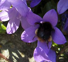 I'm a Busy Bee! by sarnia2