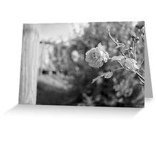 Single Rose in black & white Greeting Card