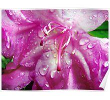 Rhododendron in the rain Poster